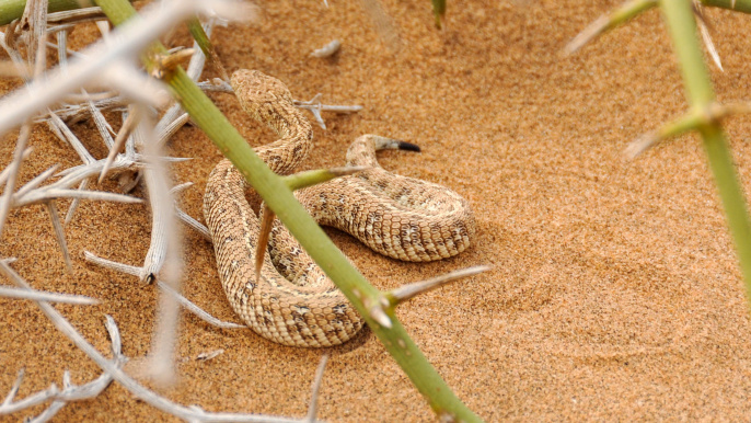 "snake-in the Desert <span class=""fotografFotoText"">(Foto:&nbsp;pixabay)</span>"